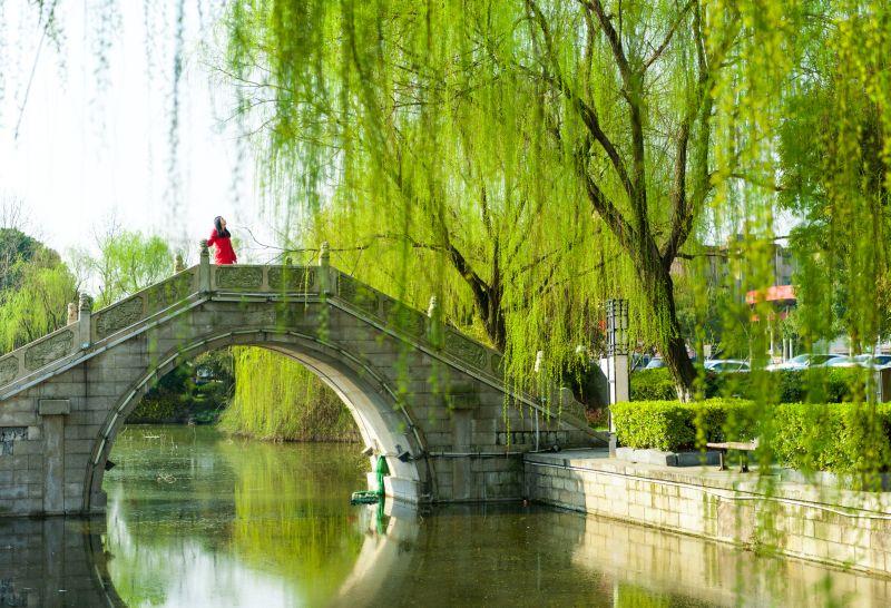视野春天图片景色柳树